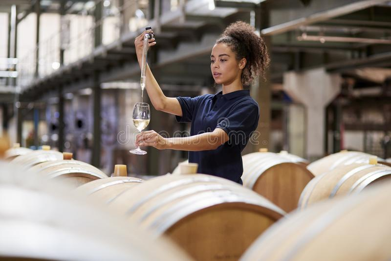 Young woman testing wine in a wine factory warehouse stock image