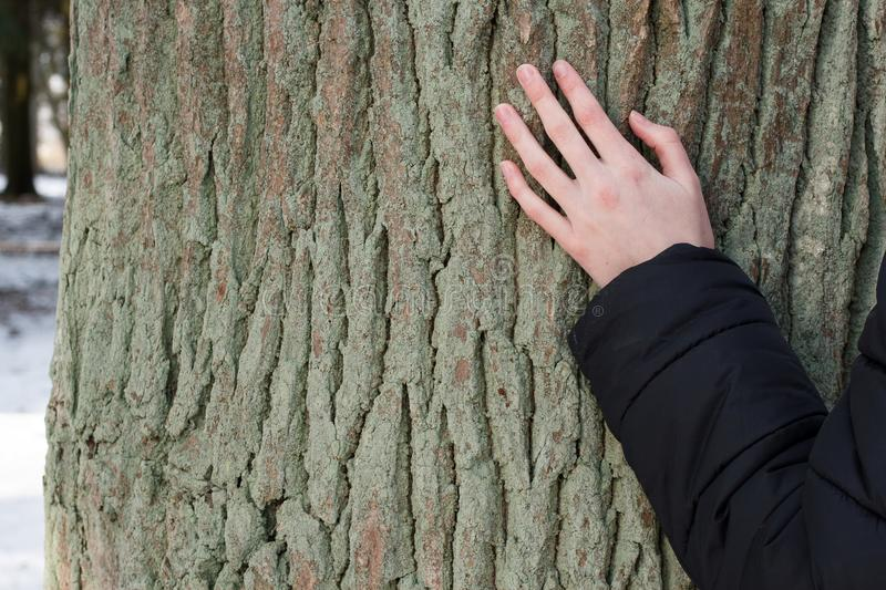 A young woman touching an old oak in the winter to make a wish stock photos