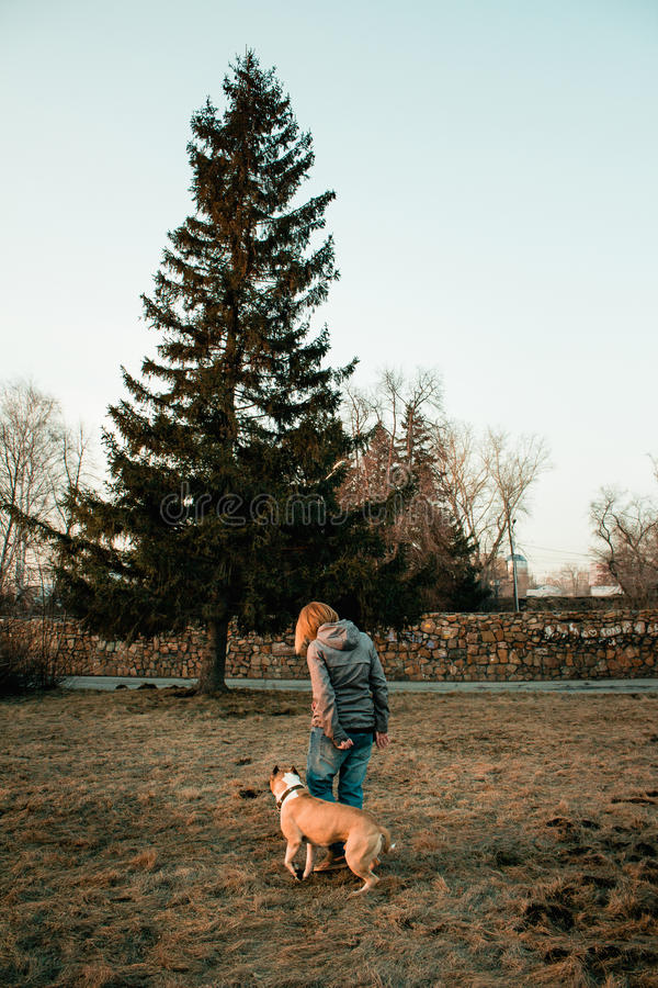 Young woman is training her dog in the evening park. royalty free stock photos