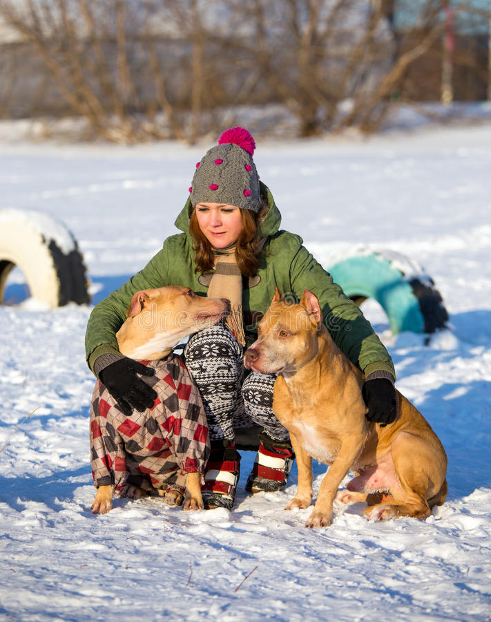 Young woman with two American Pit Bull Terrier winter. Young woman with two dogs of breed American Pit Bull Terrier winter royalty free stock photo