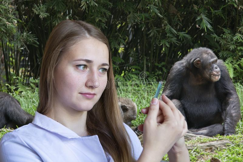 Young woman veterinarian in the background of the chimpanzee family. Portrait stock photos