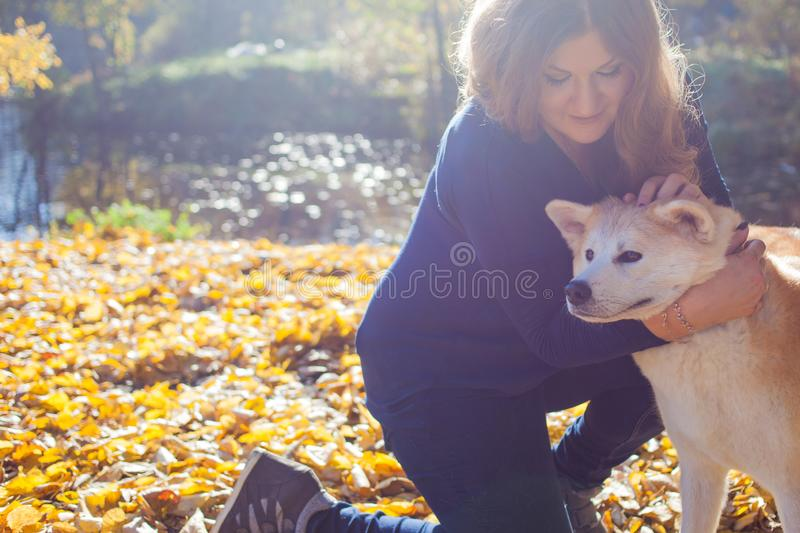 Young woman on a walk with her dog breed Akita inu. royalty free stock image