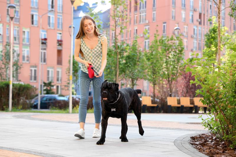 Young woman walking American Staffordshire Terrier dog royalty free stock photos