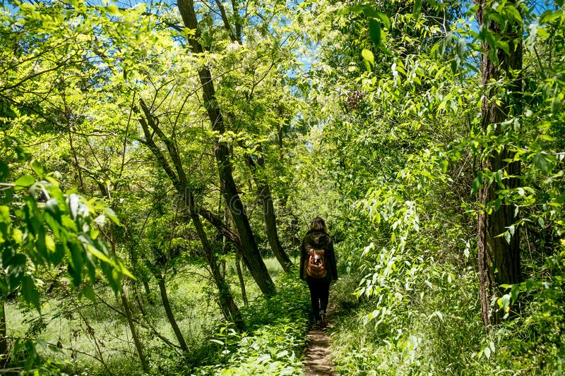 Young woman walking and exploring alone woods on a sunny summer day in daylight following path royalty free stock images