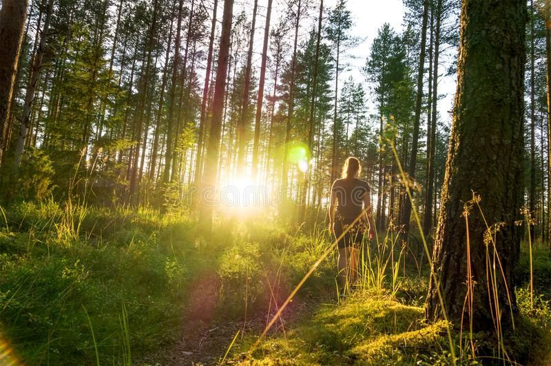 Young woman walking in forest path at sunset. Summer night in nature at dawn. Carefree lifestyle. Sun shining. Girl hiking in the woods royalty free stock image