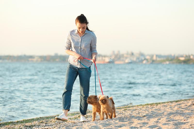 Young woman walking her adorable Brussels Griffon dogs. Near river stock image