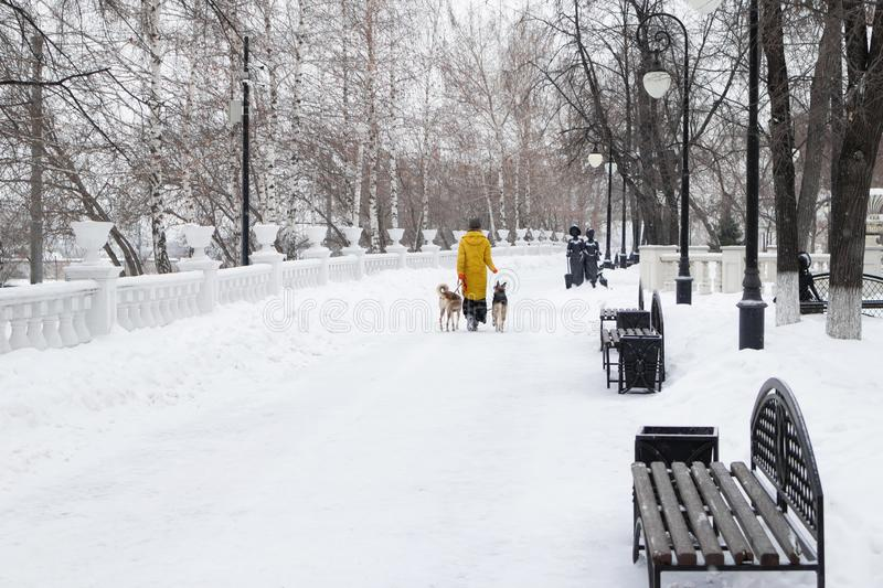 Young woman is walking in a snowy winter park with her two dogs. Back view royalty free stock photography