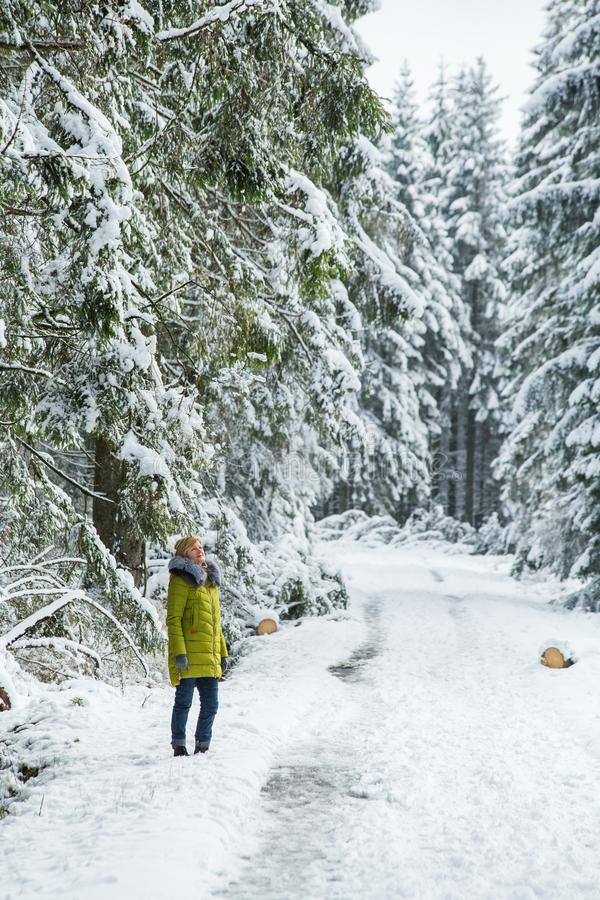 A young woman is walking through the winter forest stock images