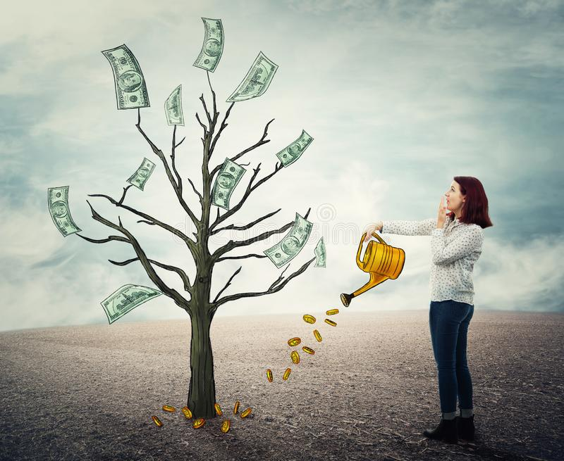 Growing money tree royalty free stock images