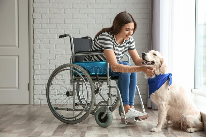 Young woman in wheelchair with dog stock photography