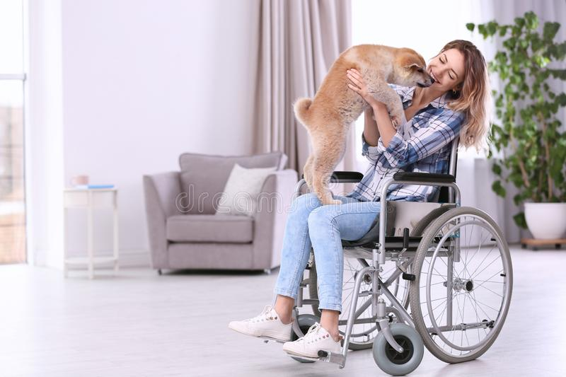 Young woman in wheelchair with puppy royalty free stock photos
