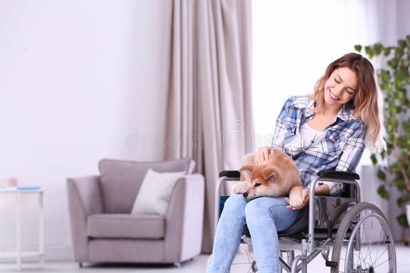 Young woman in wheelchair with puppy stock photo