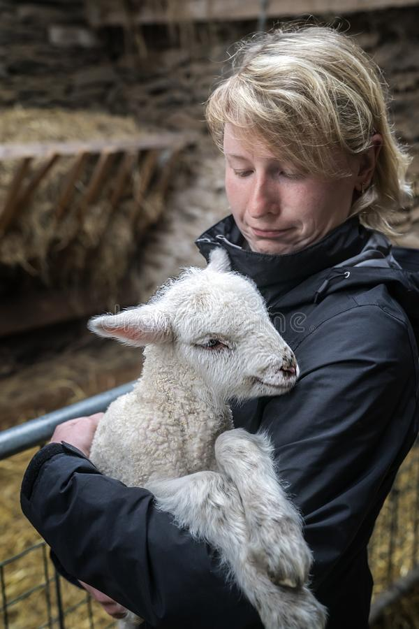 Young woman and a white  lambkin stock image