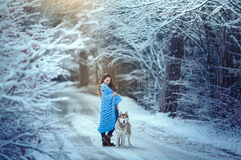 A young woman in the woods walking a purebred pet husky breed stock images