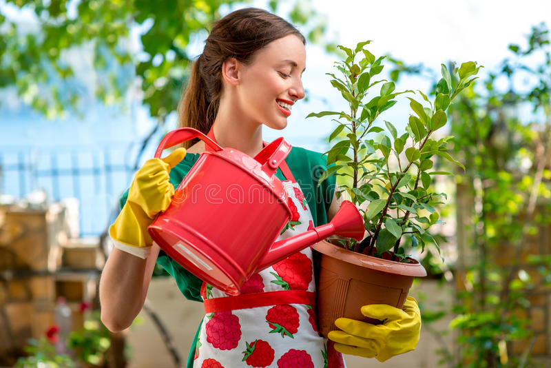 Young woman working in the garden. Young woman in apron and working gloves taking care for flower in in the garden royalty free stock photo