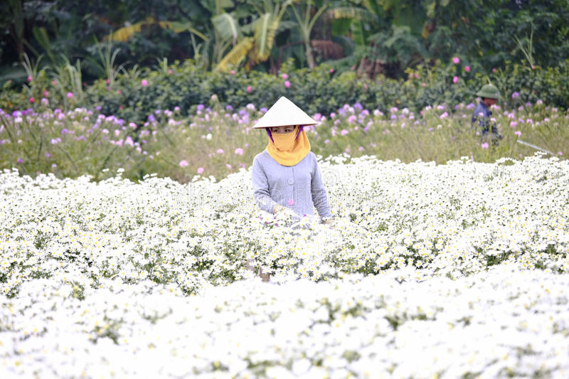 Young woman working in her garden at Hanoi, Vietnam on December 02, 2016 stock images