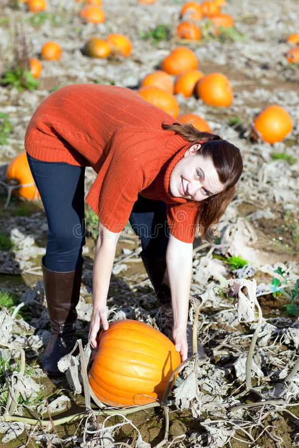 Download Young Woman Working On Pumpkin Field Stock Image - Image: 27252341