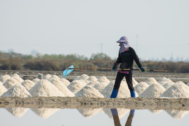 A young woman working in a salt field. A young woman working in a salt field stock images