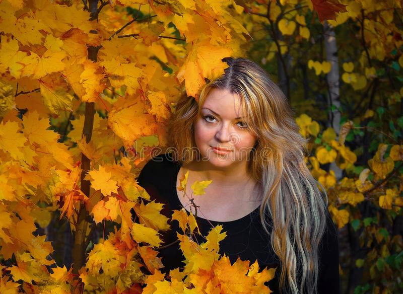 A young woman of 35 years in the autumn woods on the background of maple leaves royalty free stock photography