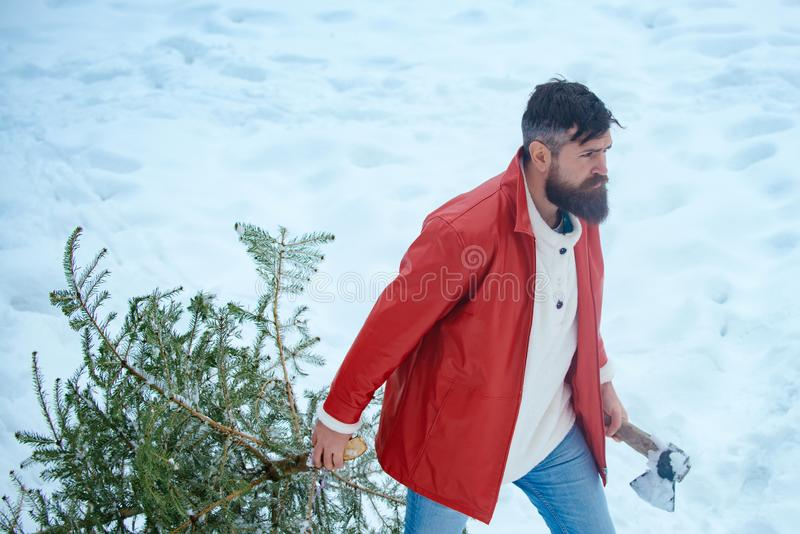 Young woodcutter winter portrait. Santa Claus with Christmas tree. Young lumberjack bears fir tree in the white snow royalty free stock photography