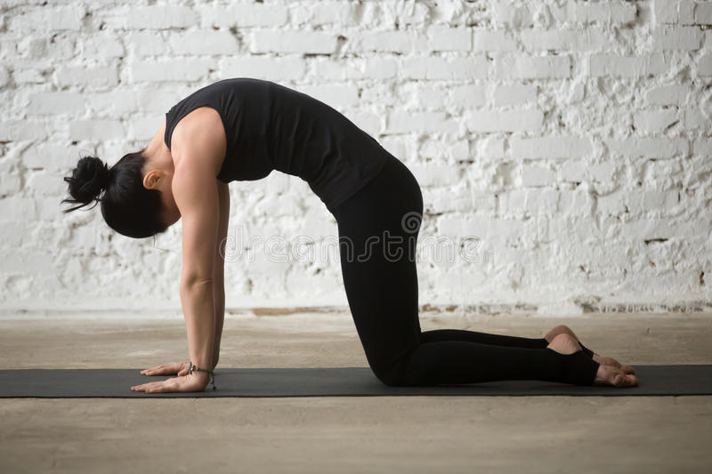 Young yogi attractive woman in Cat pose, white loft background royalty free stock photos