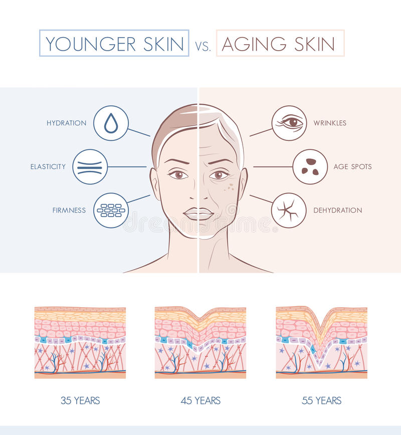 Younger and older skin comparison stock illustration