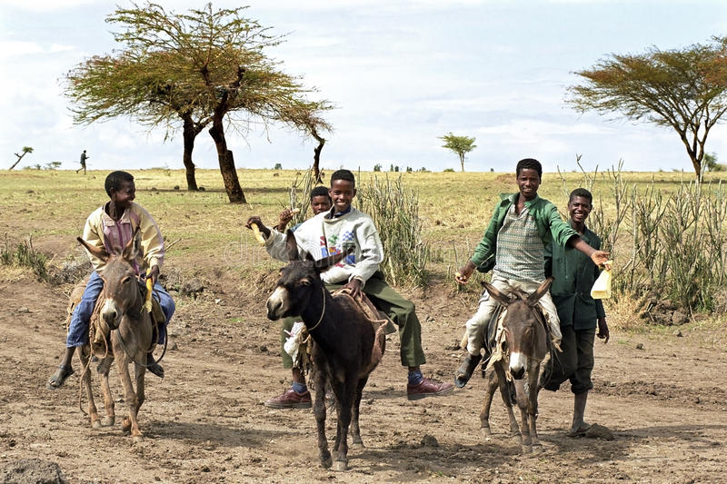 Youngsters keep race with donkeys in desert, Ethiopia. Ethiopia, village Modjo, Oromo [largest ethnic group in Ethiopia] playing boys, teenagers go. They hold a stock photography