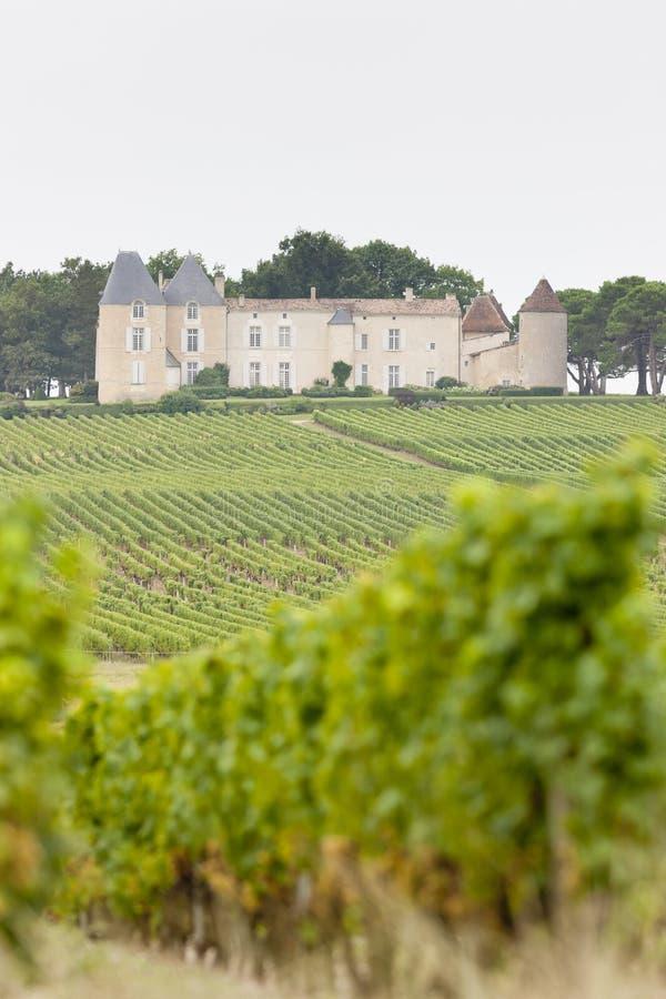 yquem för chateau D arkivfoto