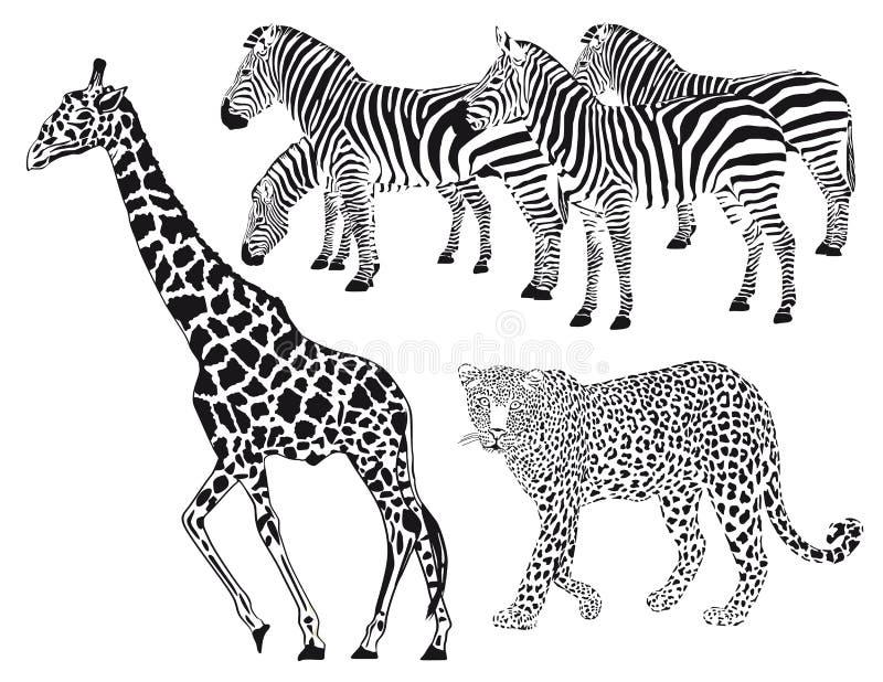 Żyrafa z lampartem i zebrami ilustracji