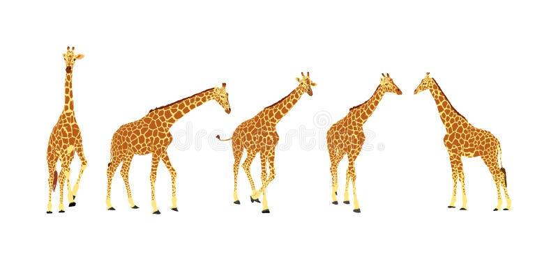 ?yrafy wektorowa ilustracja odizolowywaj?ca na bia?ym tle zwierz? afryka?skiej Wysoki zwierz? Safari wycieczki przyci?ganie Duzi  ilustracji