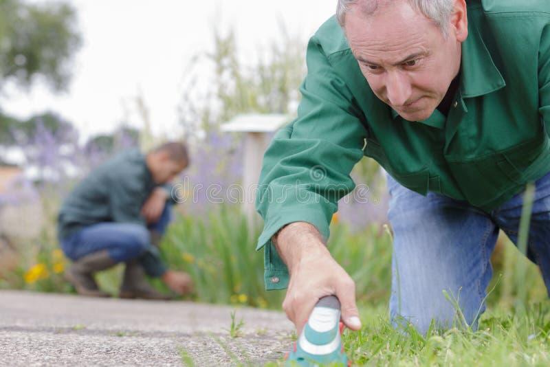 Yrkesmässig trädgårdformgivare på arbete fotografering för bildbyråer