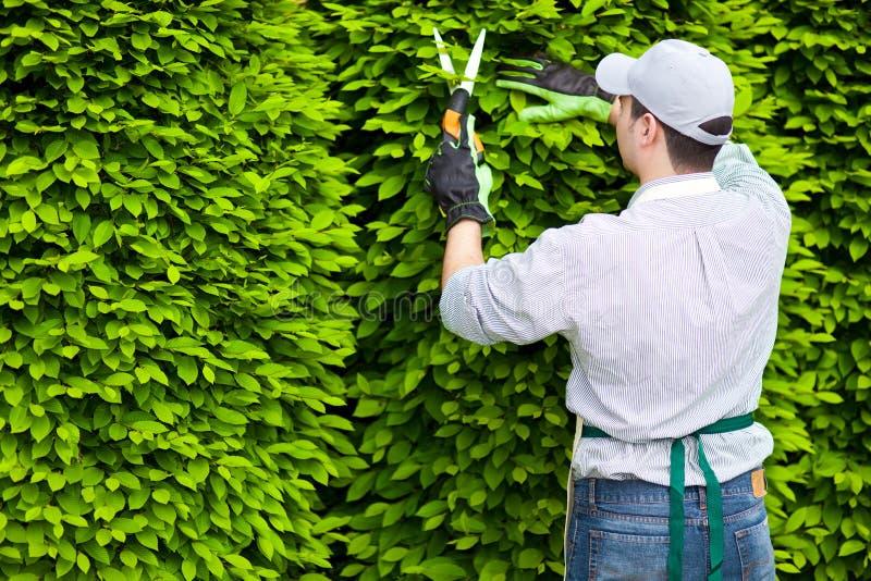 Yrkesmässig trädgårdsmästare som beskär en häck arkivbild