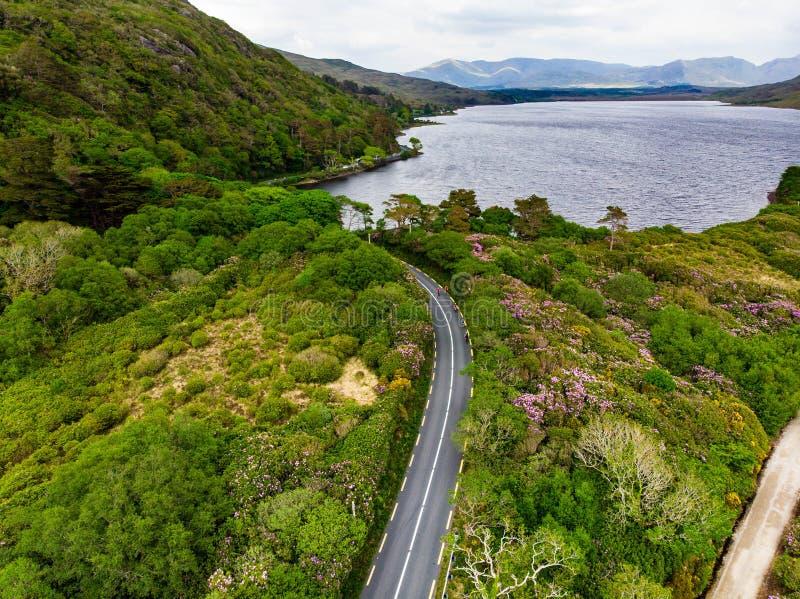 Yrkesmässiga cyklister som konkurrerar i den Connemara regionen i Irland Sceniskt irländskt bygdlandskap med berg på horisonten, arkivfoto