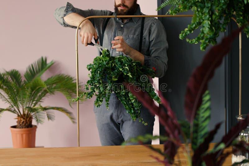 Yrkesmässiga trädgårdsmästareklippsidor av växten, medan arbeta i t arkivbilder