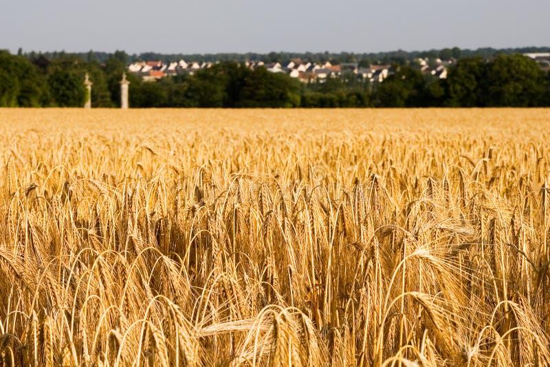 Żyta pole z dwa góruje obraz stock
