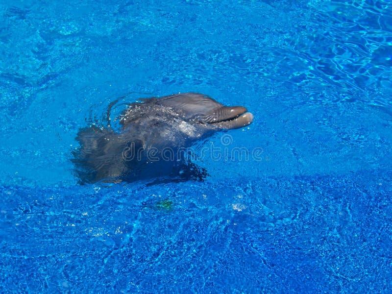 ytbehandla för delfin fotografering för bildbyråer