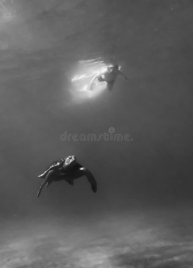 Ytbehandlar undervattens- abstrakt begrepp för havssköldpaddan som är begreppsmässigt med simmaren på, svartvitt arkivfoton