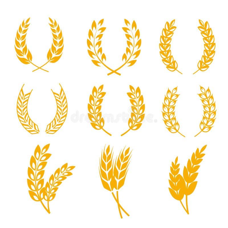Żyto ucho pszenicznych wianków wektorowi elementy dla chleba i piwnych etykietek, logowie royalty ilustracja