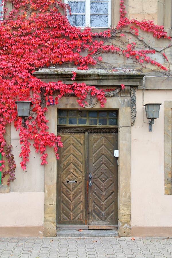 Ytterdörren av huset är bevuxen med sidor för den röda druvan royaltyfri fotografi