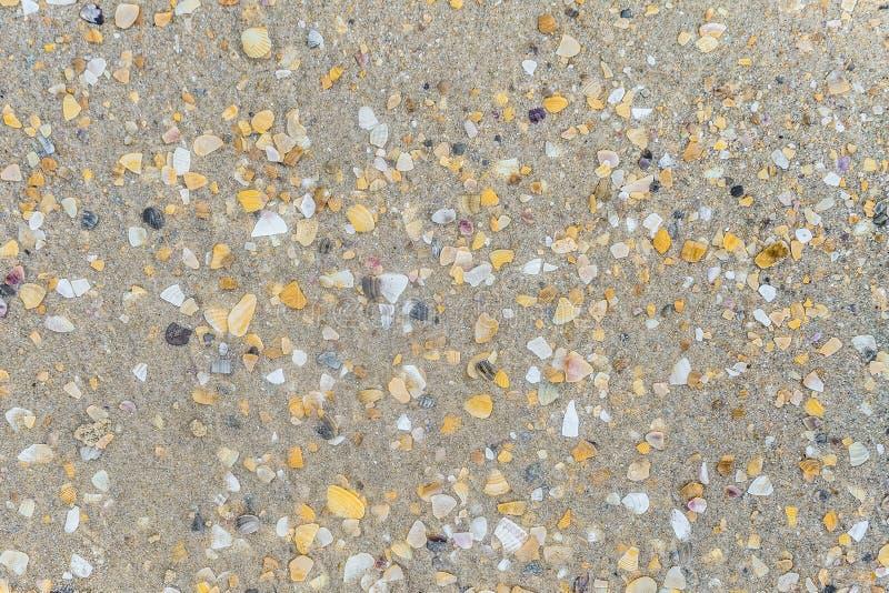 Yttersida av våt sand med skal royaltyfria bilder