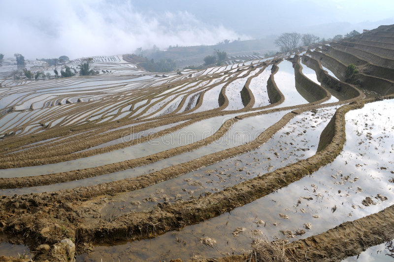 yuan de yang de terrasse de riz images stock