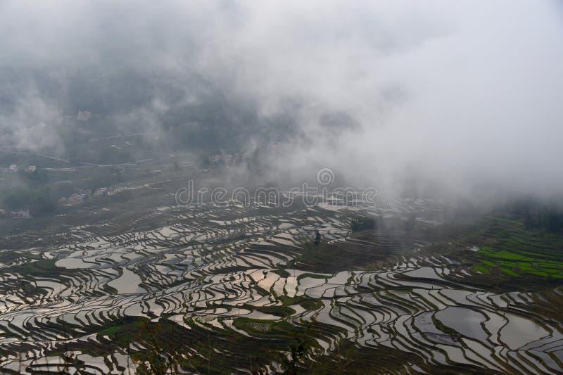 Yuan Yang rêveur sous la brume photographie stock