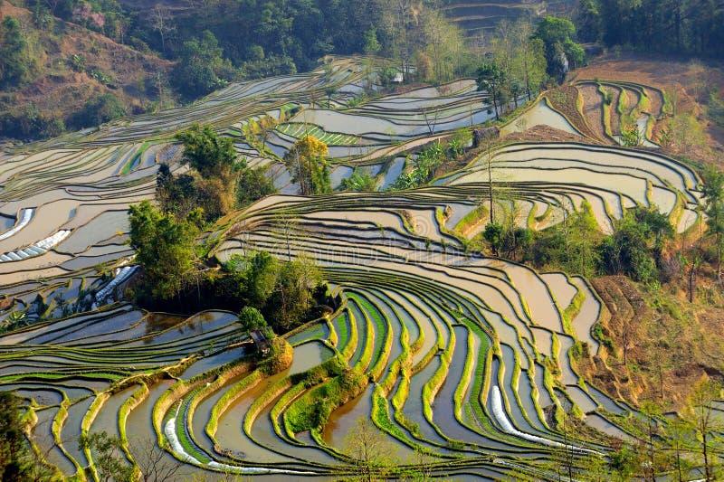 yuanyang de terrasse de riz de matin images stock