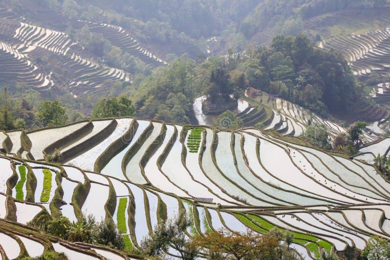 Yuanyang ris terrasserar landskap med härliga reflexioner royaltyfria foton