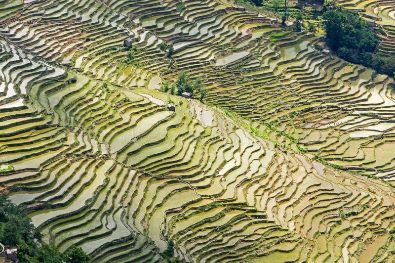 Yuanyang risterrasser, Yunnan - Kina royaltyfria bilder