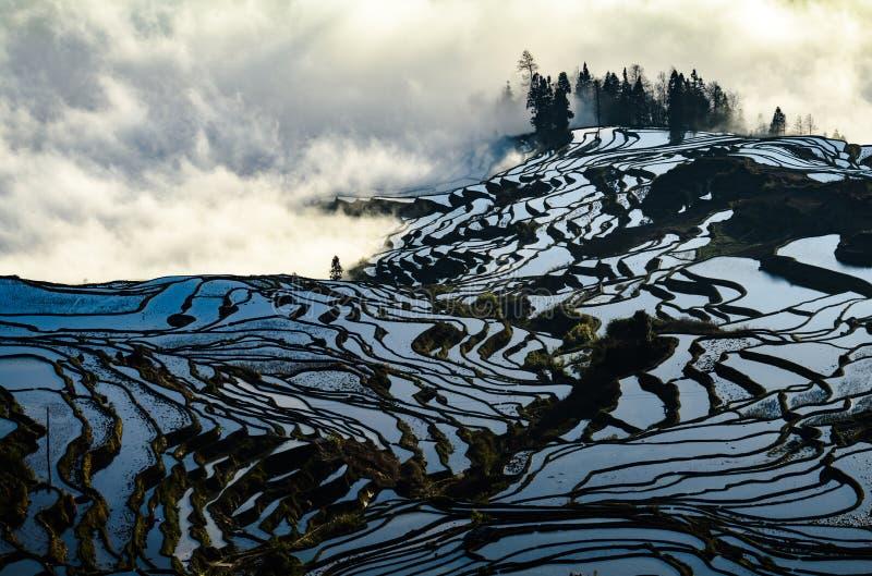 Yuanyang ryż tarasują przy wschodem słońca, Yunnan prowincja, Chiny obrazy royalty free