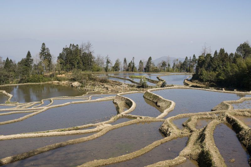 Download Yuanyang terraced fields stock photo. Image of yunnan - 8547906