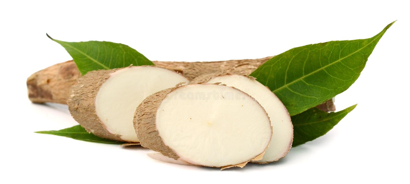Yuca Wurzel Lebensmittel, knötchenförmig stockfoto