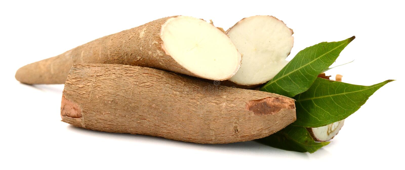 Yuca Wurzel Lebensmittel, knötchenförmig stockbilder