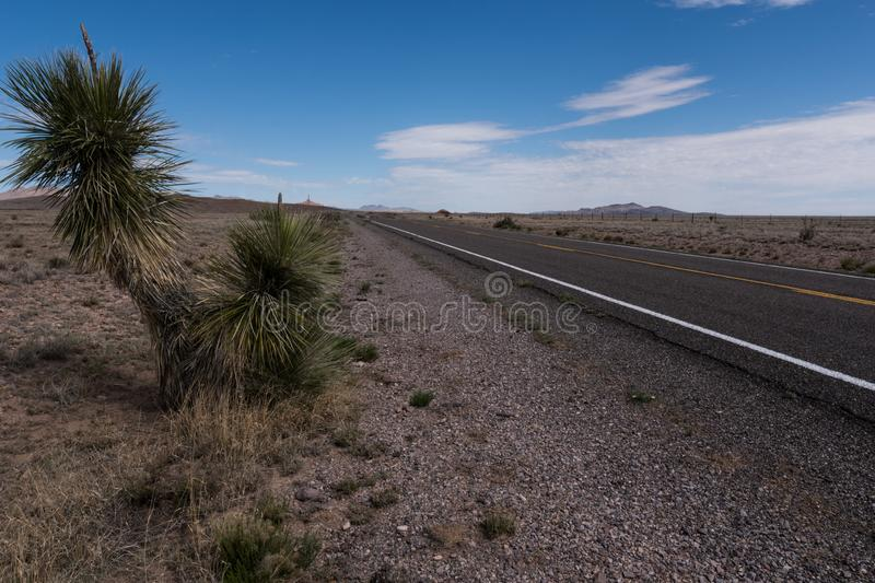 A Yucca along New Mexico highway 27. One of many Yucca plants which can be found along New Mexico state highway 27 byway hillsboro lake nutt scenic usa stock images